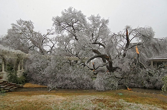 Cedar Elm February 2018