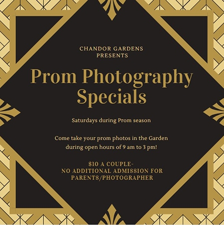 Prom Photography Specials