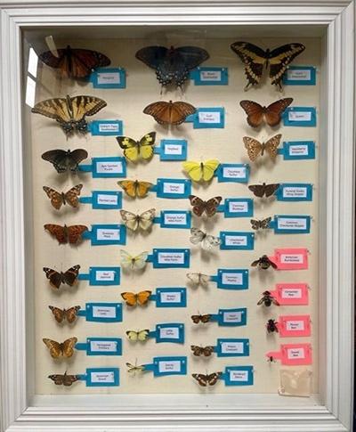 Pollinator Display