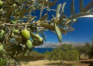 Cretan Mythos, Chania