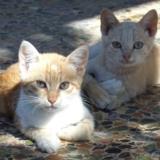 Kreta Katzen