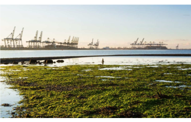 New Environmental Monitoring System for Harwich Haven