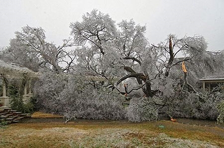 Ice Storm Damage and Cleanup