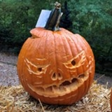 10 to 15 Pumpkin Contest Winner