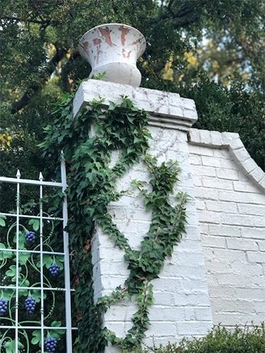 ivy climbing wall